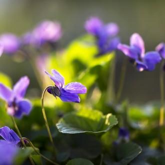 bougie parfumée avec bijou surprise, parfum violette